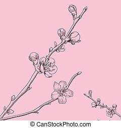 Oriental cherry vector illustration