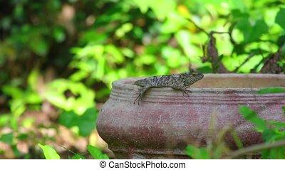 Oriental Garden Lizard Green Foliage Background - Oriental...