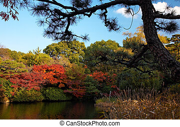 summer japanese landscape with pond and trees
