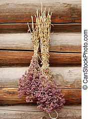 Origan Vulgare - 2 bunches of stems with flowers of aromatic...