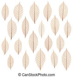 transparent leaf