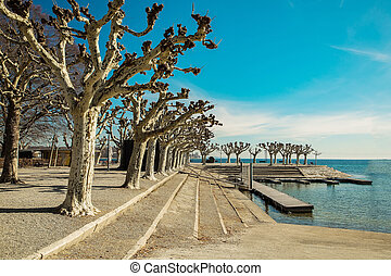 original trimmed trees on the banks of the lake - Konstanz,...