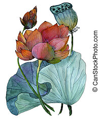 Original watercolor painting of aquatic plants of lotus