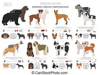 origine, plat, différent, service, regarder, couleur, pays, fonctionnement, isolé, collection, chiens, white., style.