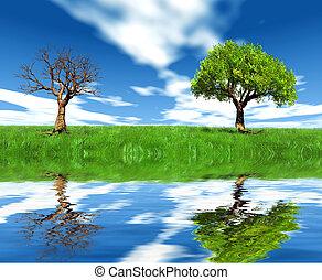 orilla, árbol, muerto, vivo, uno
