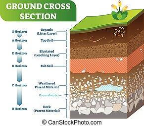 orizzonte, sezione, subsoil, croce, illustrazione, organico, vettore, levels., topsoil, altro, suolo