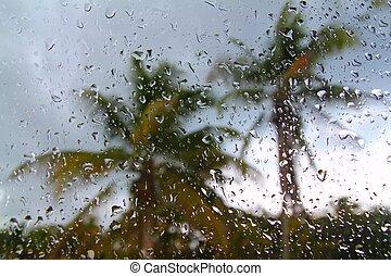 orkan, tropical oväder, palmträdar, från, i bil