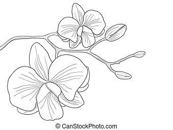 orkidé, blomma