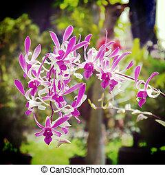 orkidé, blomma, gammal, retro, årgång, stil