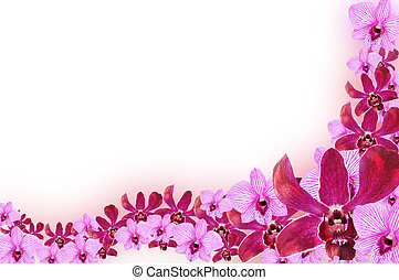 orkidé, blomma, gräns, design