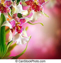 orkidé, blomningen, design