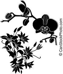 orkidé, blomningen, vektor, klematis, isol