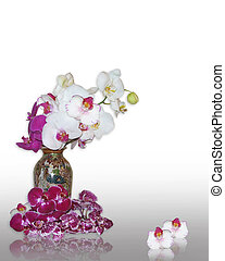 orkidéer, in, orientalisk, vas