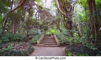 orné, jardin botanique, béton, exotique, étapes