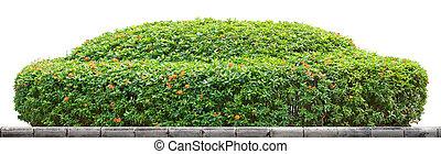 Ornamental bush - Round ornamental bush isolated on white...