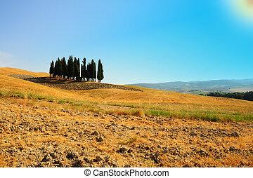 Ornamental Cypress - Tuscany Landscape With Many Ornamental...