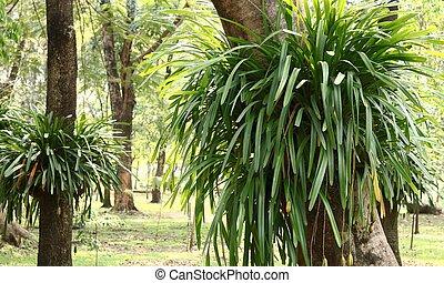 Ornamental foliage in the garden.
