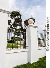 a beautiful manicured olive tree in an ornamental garden
