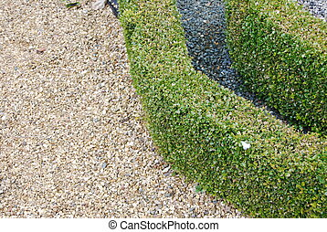 close-up on green and beautiful ornamental garden with hedges of buxus sempervirens
