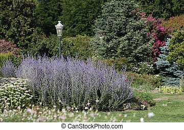 Details of an ornamental garden in summer with beautiful russian sage.