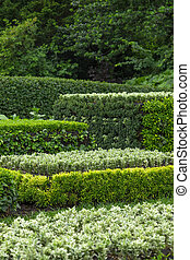 Ornamental garden. Trimmed shrubs of different shades of green.