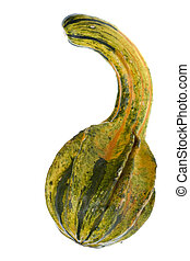 Ornamental Gourd Isolated