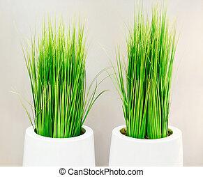 ornamental, grønnes græs, ind, hvid, vaser