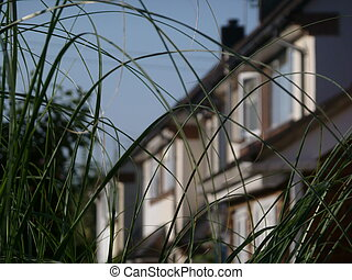 Ornamental Grass and Row of Houses - Ornamental grass with ...