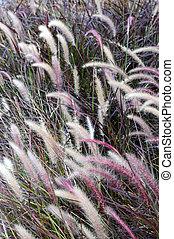 Beautiful plants blowing in field in summertime