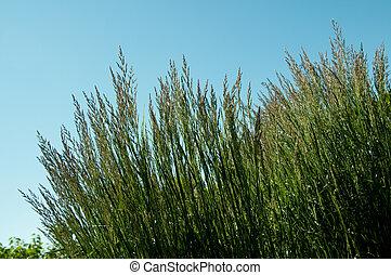 ornamental grass grown as part of a flower bed