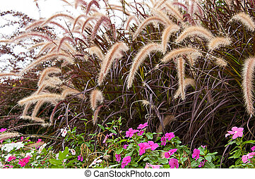 Ornamental grass in the nature landscape image with pink Impatiens flowers.