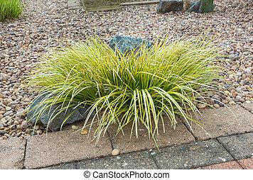 Ornamental grass set in rockery