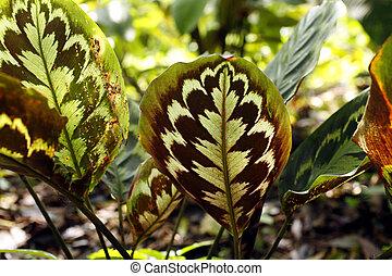 ornamental, planta, backlit, rainforest