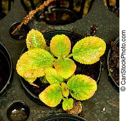 Ornamental plants for landscaping.