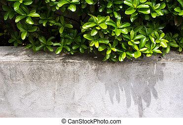 Ornamental plants on Concrete wall