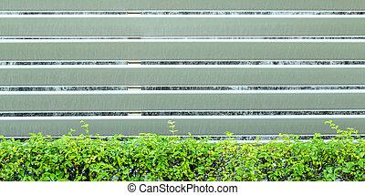 ornamental plants on wall