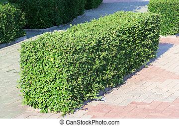 ornamental shrub images and stock photos  5937 ornamental shrub      rh   canstockphoto com