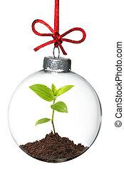 ornamento natal, com, planta jovem, dentro