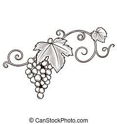 ornamento, vetorial, videira, ramos, uva