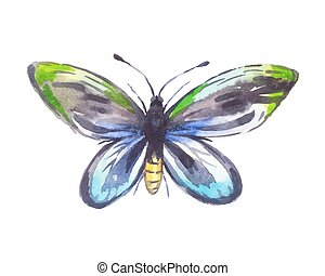 Ornithoptera alexandrae watercolor, butterfly