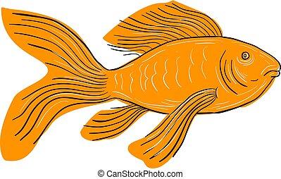 Pesce koi nishikigoi carpa disegno rosso koi schizzo for Pesce rosso butterfly