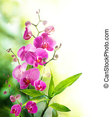 orquídea, beautyful, bambu