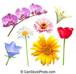 orquídea, camomila, flor, bluebell, set., lirio, vector, tulipán, margarita