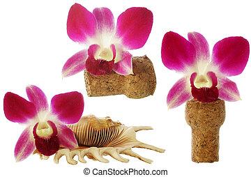 orquídea, elementos
