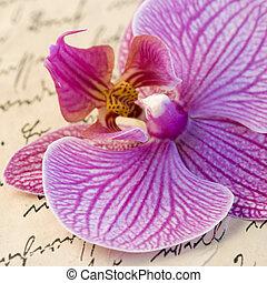 orquídea, en, carta