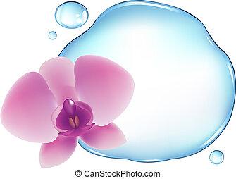 orquídea, encima, agua
