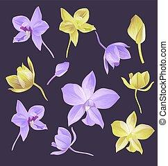 orquídea, flor, conjunto