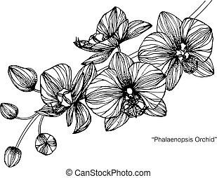 orquídea, flor, drawing.