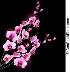 orquídea, flor rosa