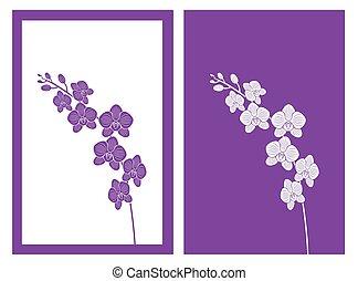orquídea, flor, vector